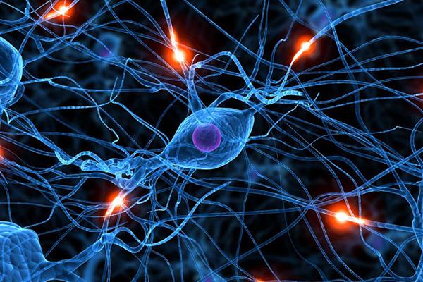 شناخت تصویر در شبکه عصبی