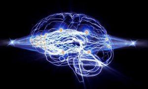 شبکه عصبی