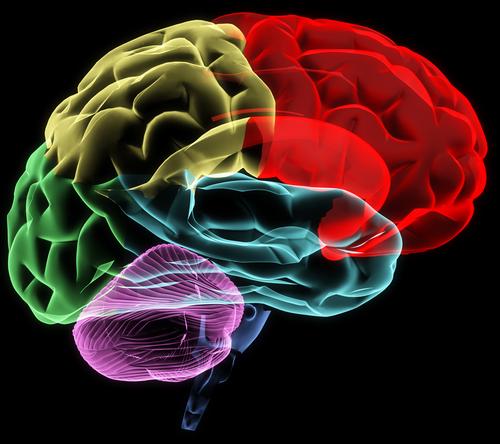 داروشناسی عصبی: آناتومی نوروفارماکولوژی
